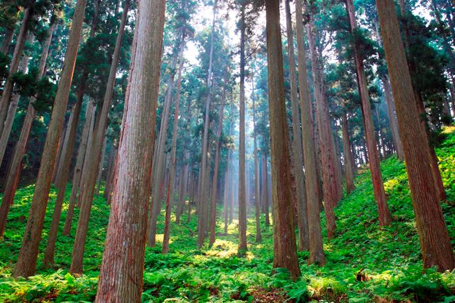 一般社団法人more trees
